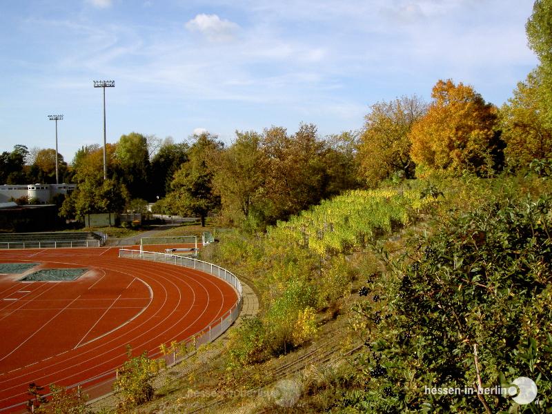 hessen-in-berlin.de | Anbaugebiet Schmargendorf
