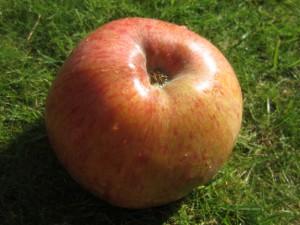 hessen-in-berlin.de | Apfel